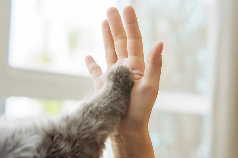 老人ホーム ペット可 千葉ペットと飼い主の手