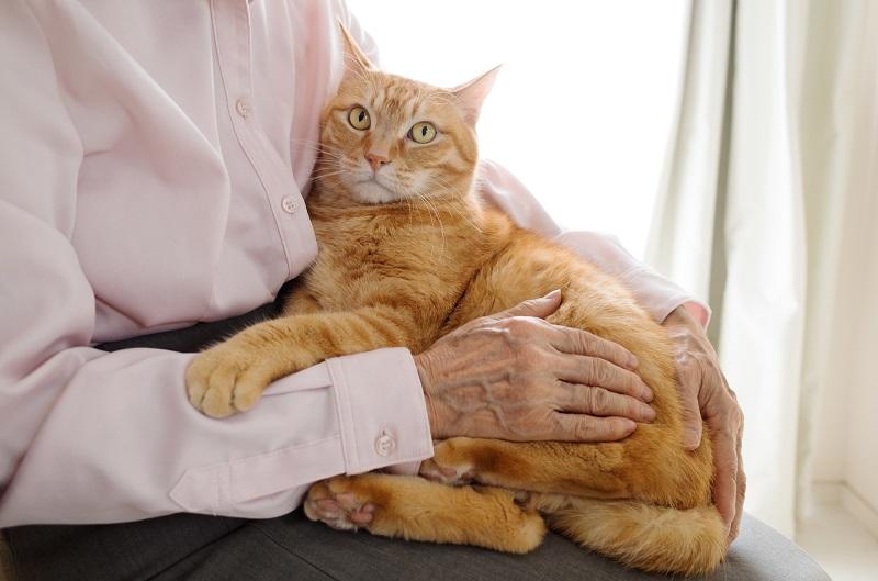 老人ホーム ペット可 シニア-猫を抱くシニアの手