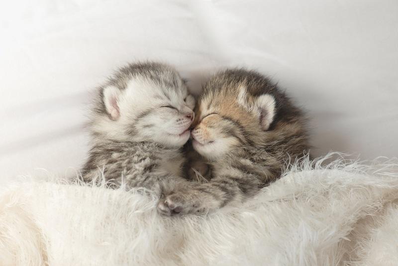 老人ホーム ペット可 神奈川-2匹の寝ているかわいい猫
