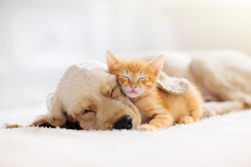 老人ホーム ペット可 埼玉-かわいい猫と犬
